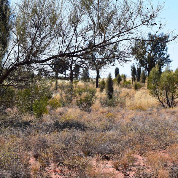 Outback vegetation