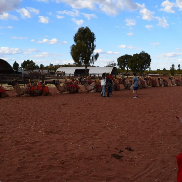 Getting in the camels