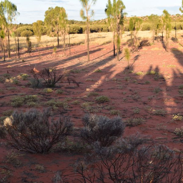 Outback shadows